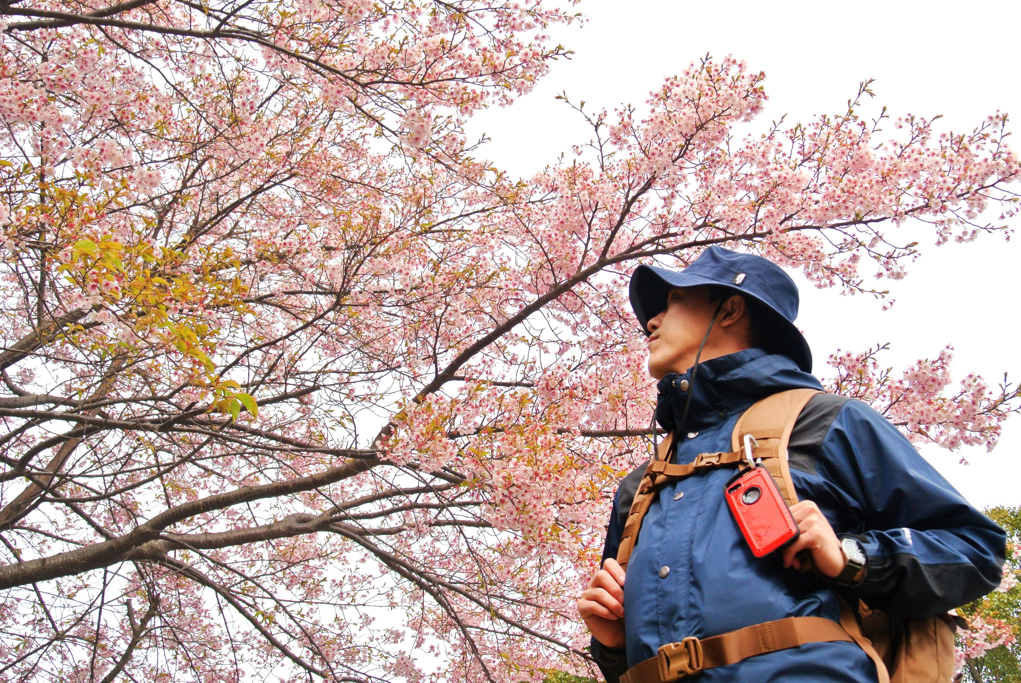 ROOT CO. 箱根風祭 河津桜撮影-01