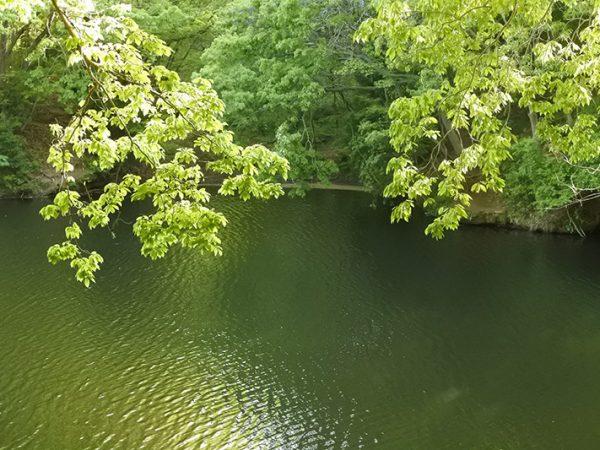 初夏の震生湖でバス釣り&ロケ