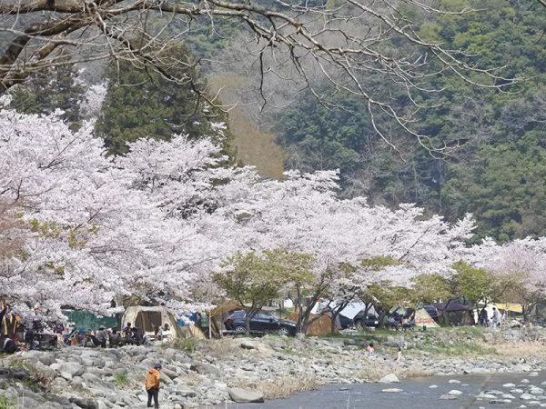 桜花見デイキャンプ@青野原キャンプ場